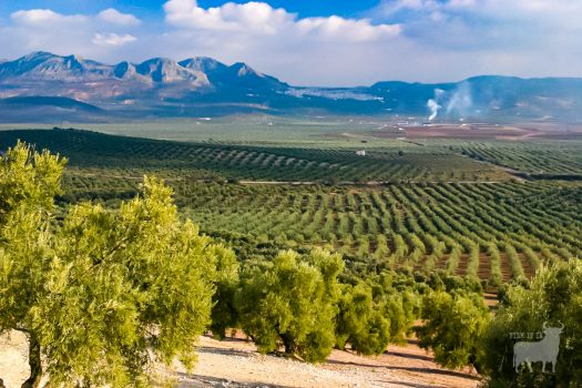 Spain landscapes fields farmland film location olive groves