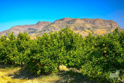 Spain landscapes fields farmland film location orange groves