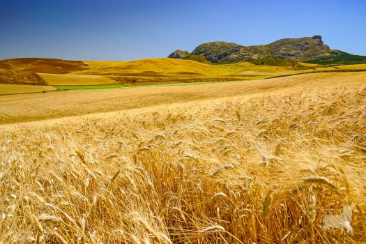 Spain landscapes fields farmland film location wheatfields
