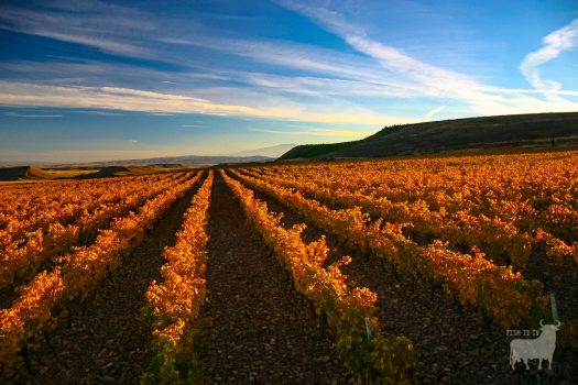 Spain landscapes fields farmland film location vines