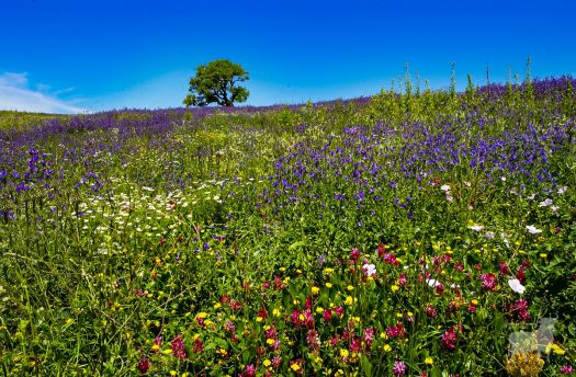 Spain spectacular wild scenery film location flower fields