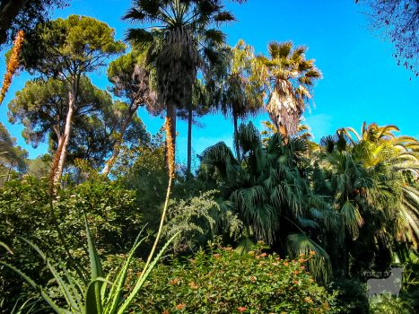Sub-tropical gardens are common in Andalucia