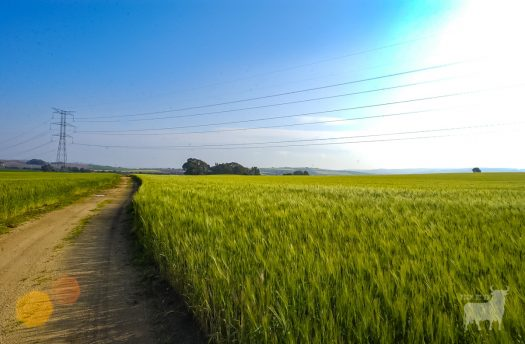 Spain landscapes fields farmland film location wheat